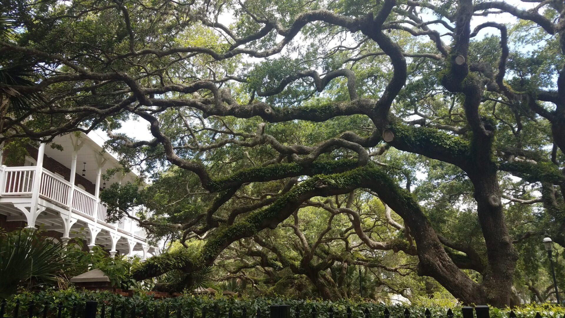 overgrown tree